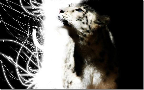 mac os x snow leopard wallpaper - leopard light