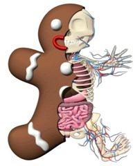 gingerbread-anatomy