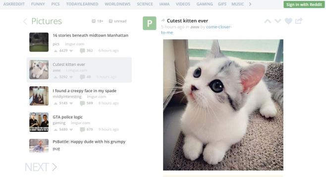 Cutest kitten ever – Uforio