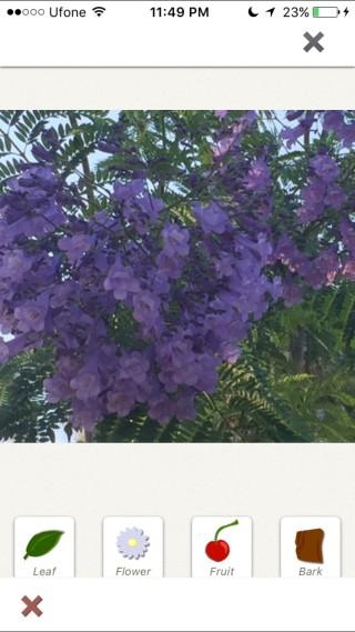 plantnet-photo