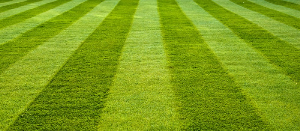 large-lawn-with-stripes